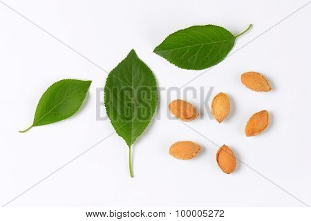 plum leaves and stones on white background
