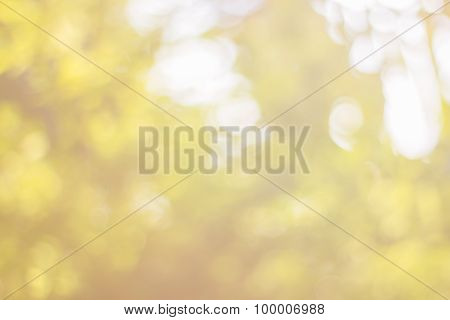 Abstract Bokeh Of Tree Color For Background