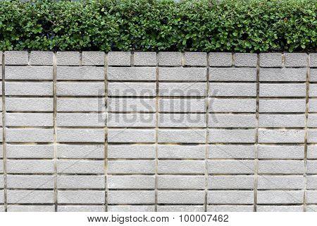 Brick Walls And Green Trees.