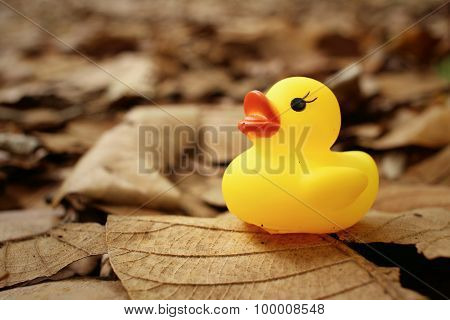 Yellow Rubber Duck On Background Of Brown Leaves.