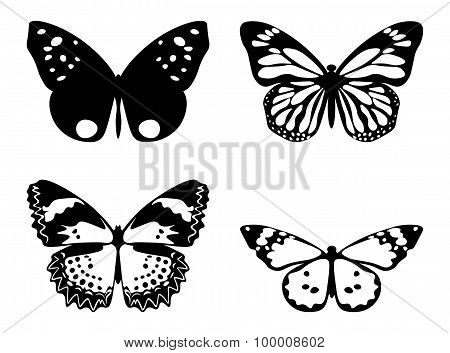 Butterfly Black And White