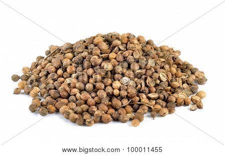 Coriander Seed On White Background
