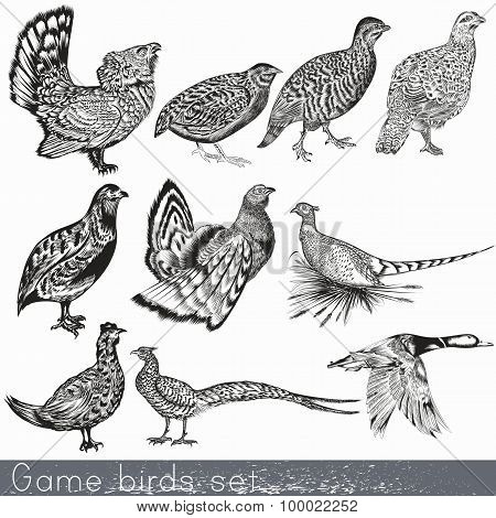 Set Of Detailed Hand Drawn Game Birds