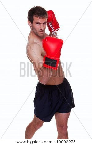 Male Boxer Isolated
