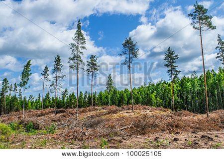 Decimated deforested hillside