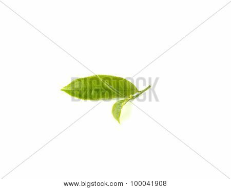 Tea Leaves On White Background.