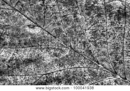 Autumn leaf background in black and white