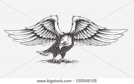 Detailed Hand Drawn Eagle. Vector.