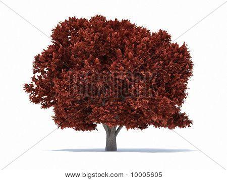 Tree Rust