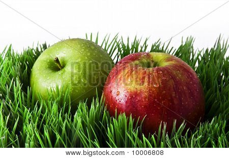 Apples in green grass