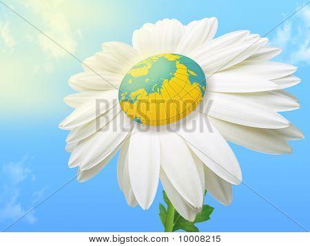 World Flower