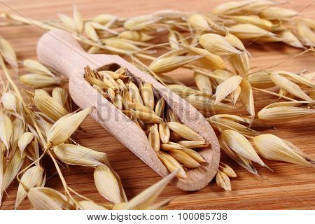 Heap of organic oat grains on wooden spoon and ears of oat healthy food and nutrition poster