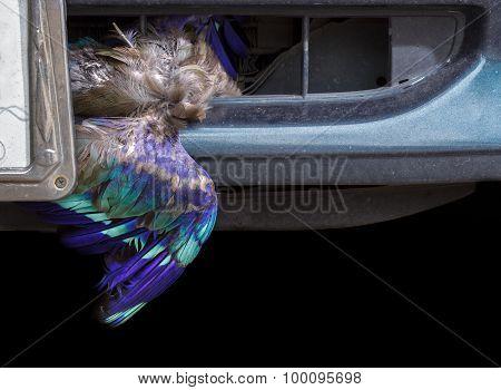 Dead Bird Stuck In Front Of Car.