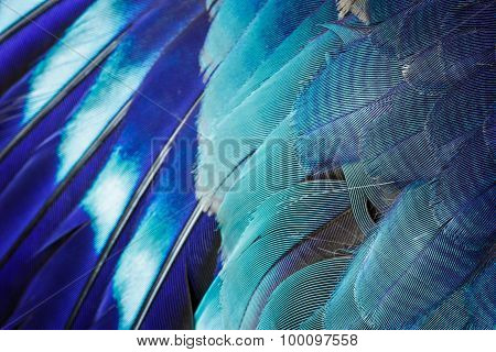 Blue Feather Background.