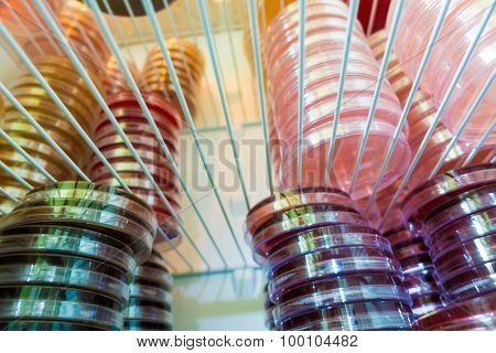 Petri dishes in a refrigerator medical laboratory
