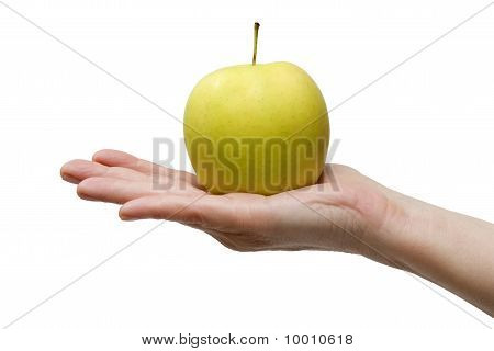 one yellow apple in the hand isolated on white background
