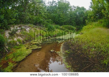 wild river landscape in the impenetrable forest swamp fine sand