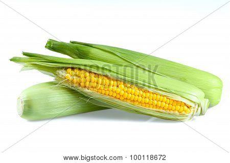 Fresh Ripe Sweetcorn isolated on white background
