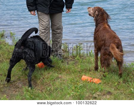 Engaged Retrievers