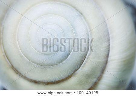Spiral Seashell Background