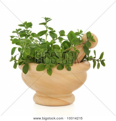Oregano Herb Leaves