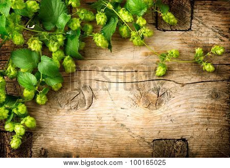 Hop twig over old wooden table background. Vintage style. Beer production ingredient. Brewery. Fresh-picked whole hops close-up. Brewing concept wallpaper.