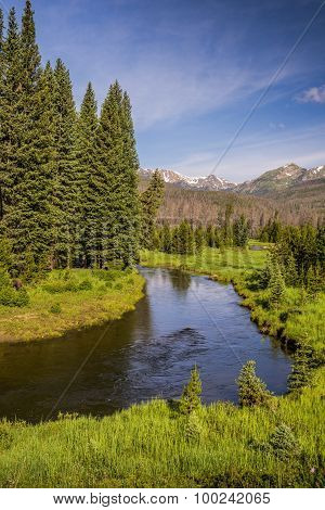 Colorado River with Pine Trees