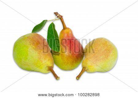 Three Pear Bartlett On A Light Background