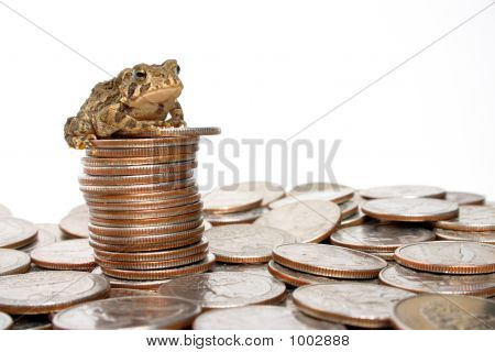 Toadally Rich
