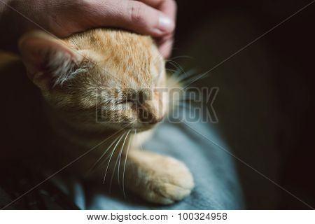 Human Hand Caressing A Kitten