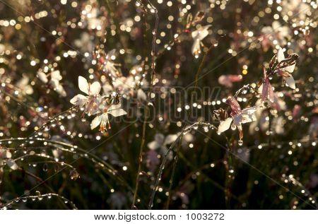 Apple Blossom Grass