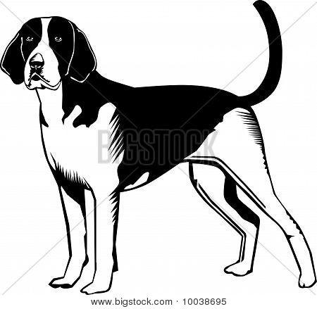 Black And White American Fox Hound Dog