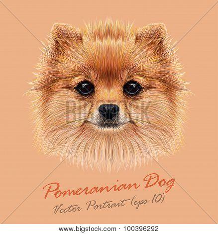 Vector Illustrative Portrait of Pom Pom