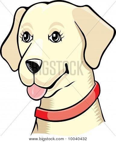 Labrador Retriever Bitch