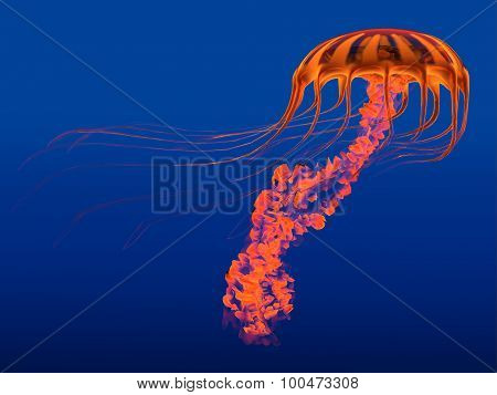Orange Glowing Jellyfish