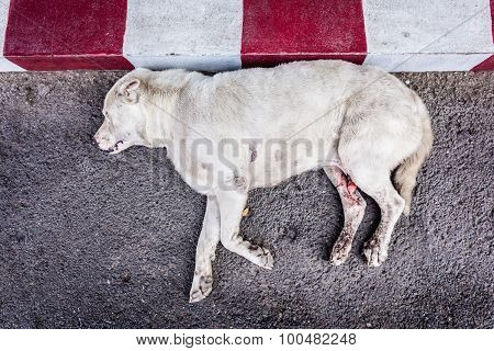 a poor diseased thai stray dog dying on the side of the road maybe after being run over poster