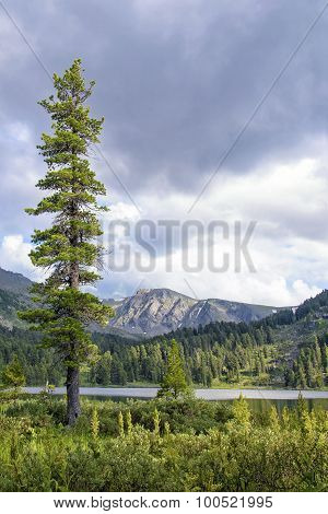 Summer Mountain Landscape With Tall Fir Tree And Tarn