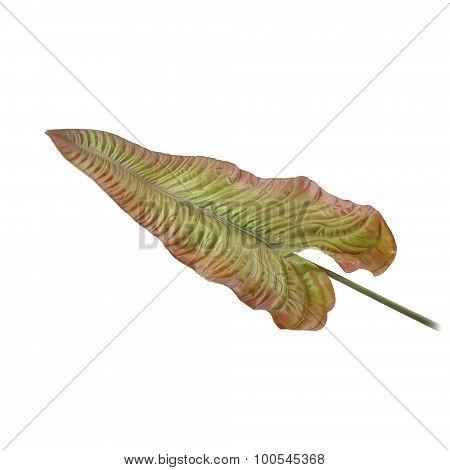 Colocasia esculenta Plant green leaf