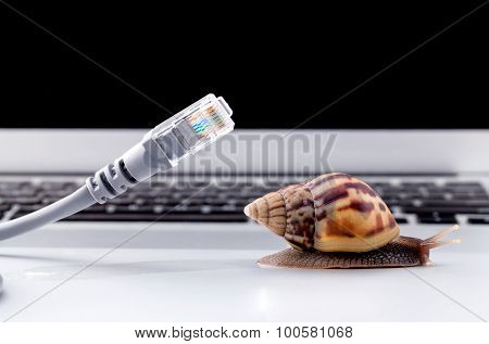 Snail With Rj45 Connector Symbolic Photo For Slow Internet Connection. Broadband Connection Is Not A