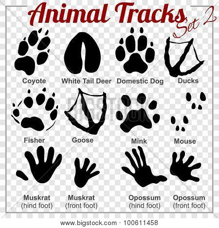 Animals Tracks - vector set,