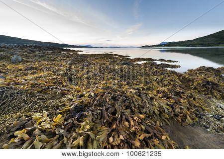 Lofoten Islands Fjord Landscape