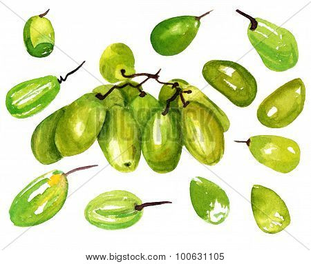 Watercolour drawing of green grapes on white background poster