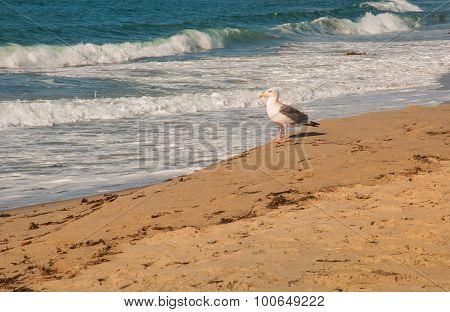 Seagull On Beach Sand