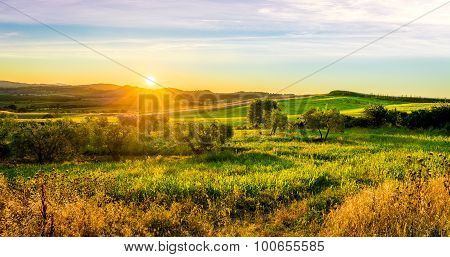 Sunrise over green tuscan hills in Italy poster