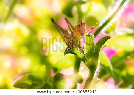 Grasshopper on a flower.