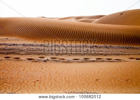 Camel footprints and wind created patterns in the sand dunes of Liwa oasis United Arab Emirates