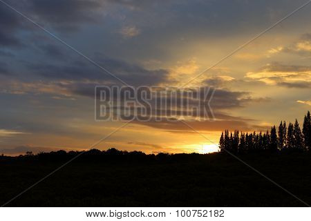 sunset and forest silhouette