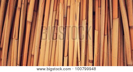 Dried Haulm Texture. Aged Photo. Bamboo Like Grass Close Up.