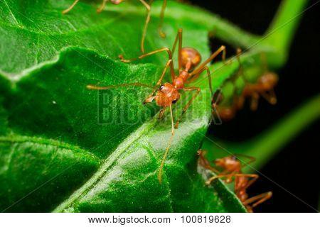 Ant ant ant