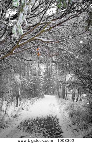 winter path with a natural tree arch poster